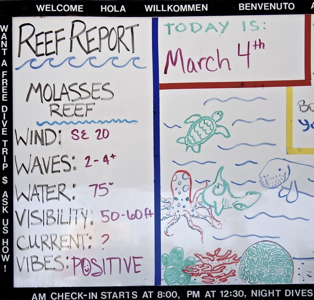 reef report
