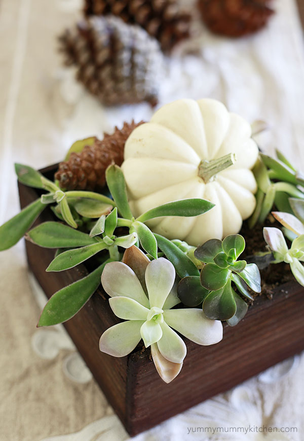 simple fall centerpiece succulents