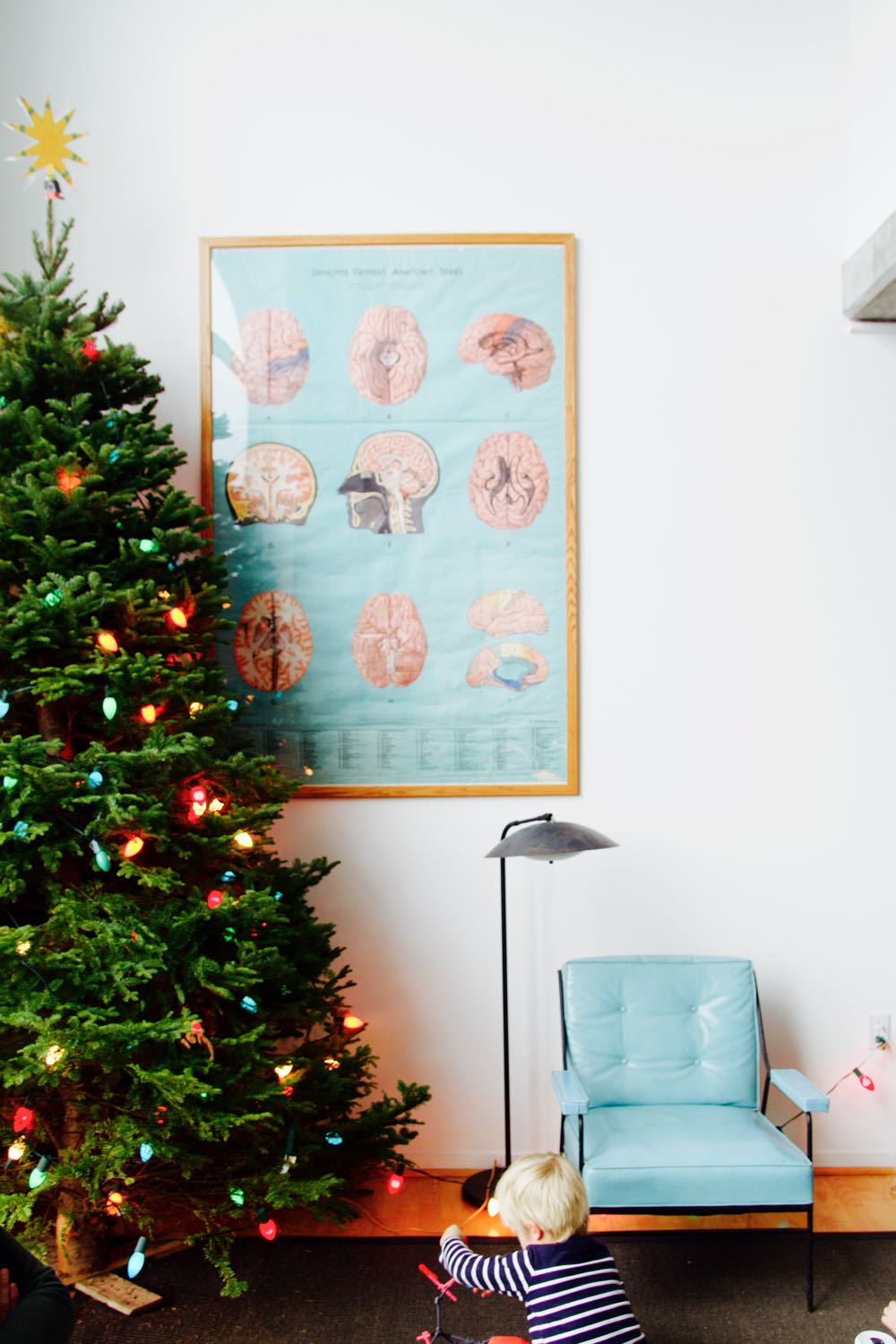 vintage anatomy poster featuring a brain diagram and a christmas tree