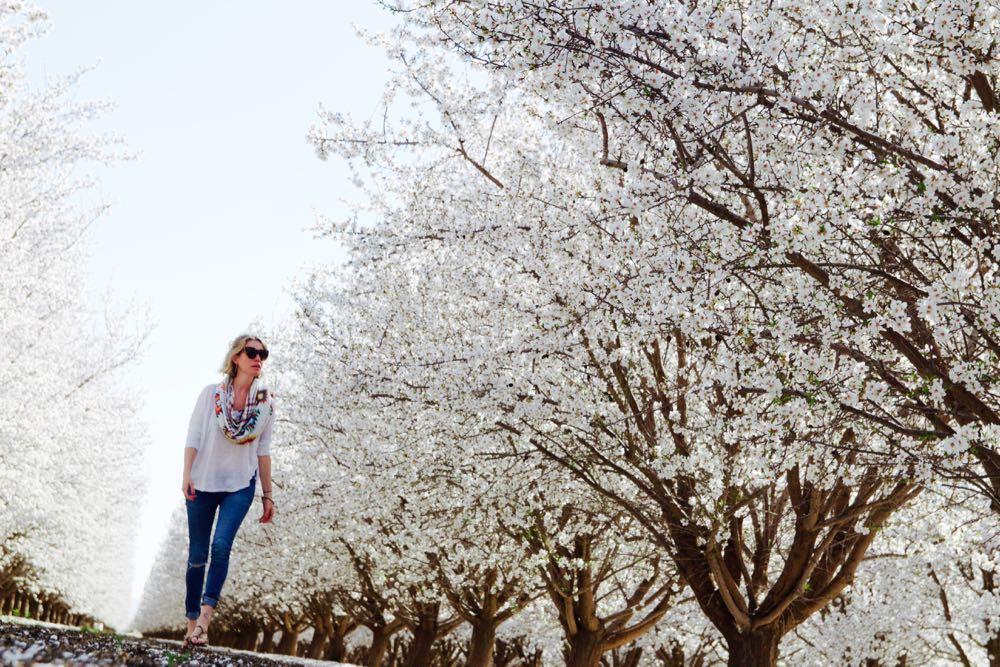 Walking through an almond tree field