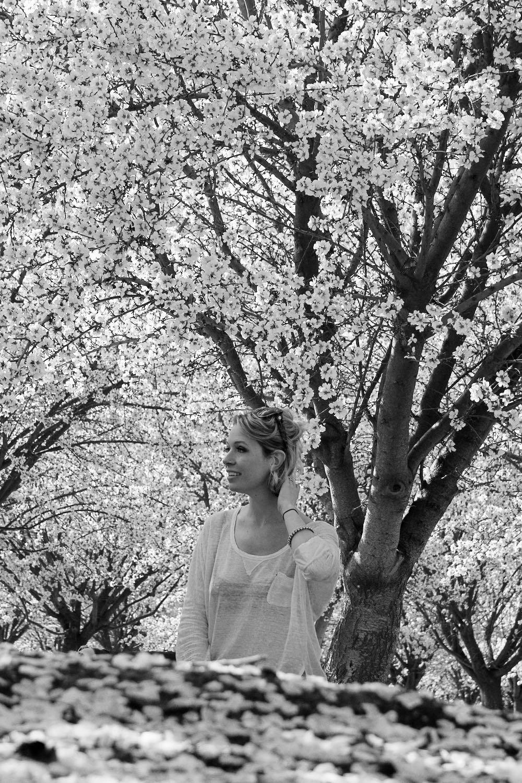 California almond tree blossoms