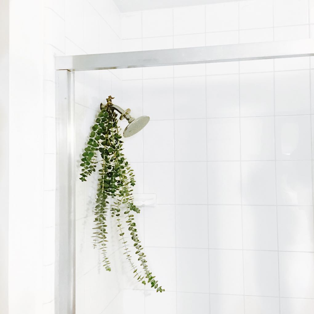 the benefits of hanging eucalyptus branches in your shower
