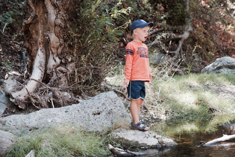 where to find tadpoles in the state park