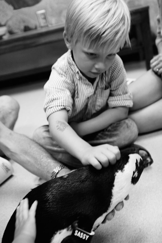 the penguin experience at audubon aquarium
