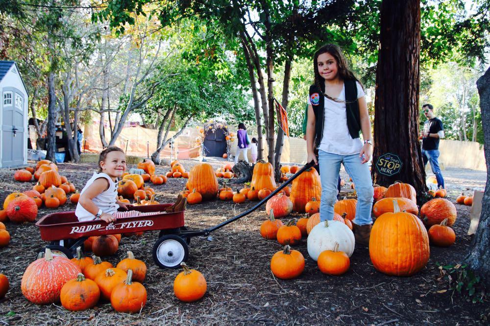 family pumpkin patch in san jose california