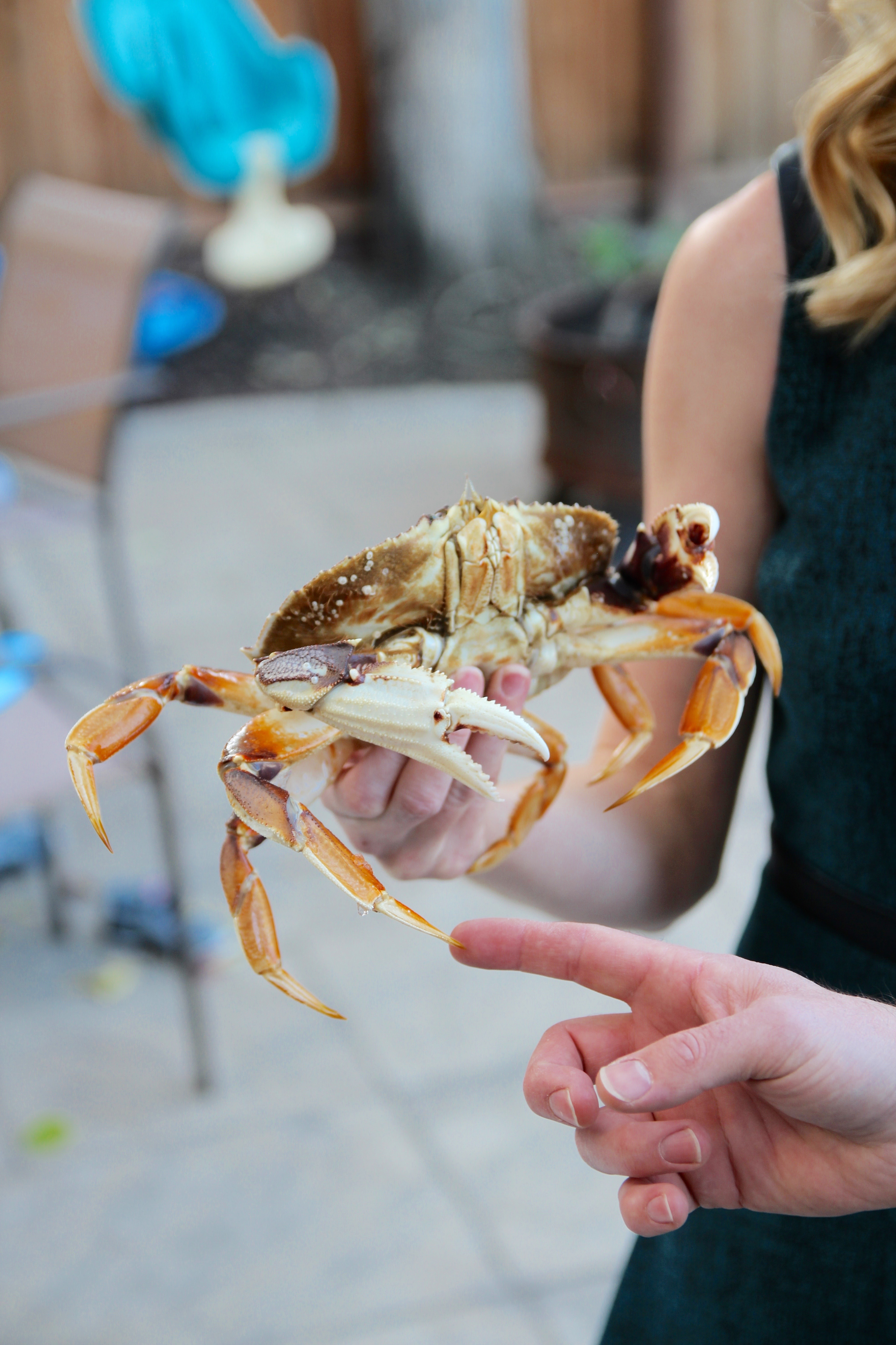 holding a huge dungeness crab