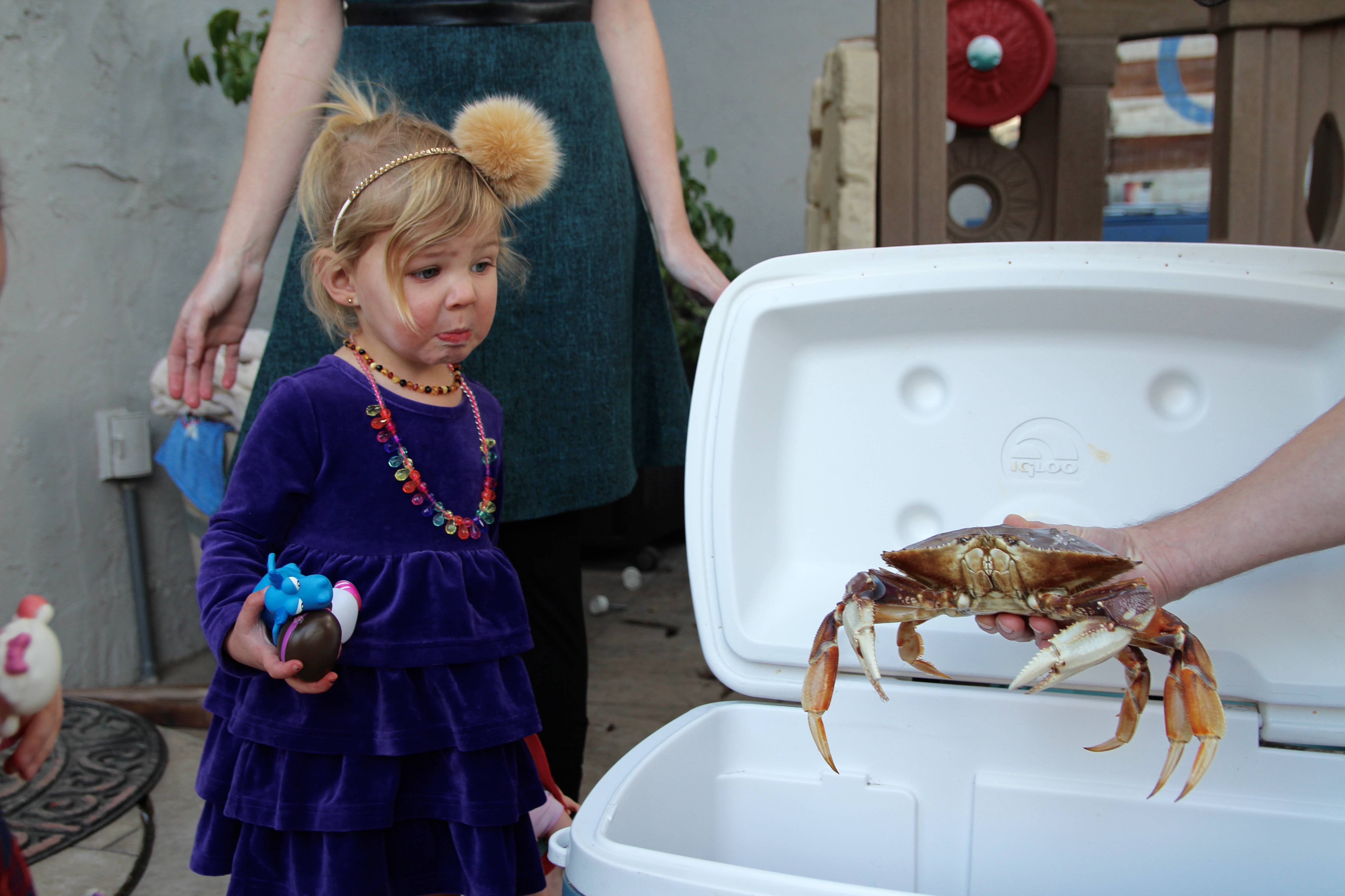 little girl staring at dungeness crab