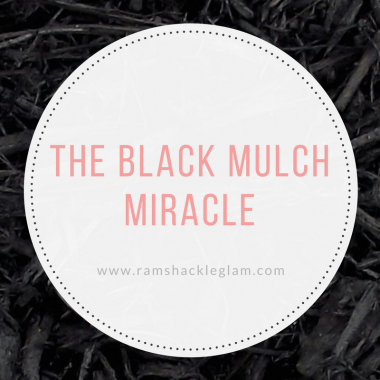 how to use black mulch for your home exterior landscaping