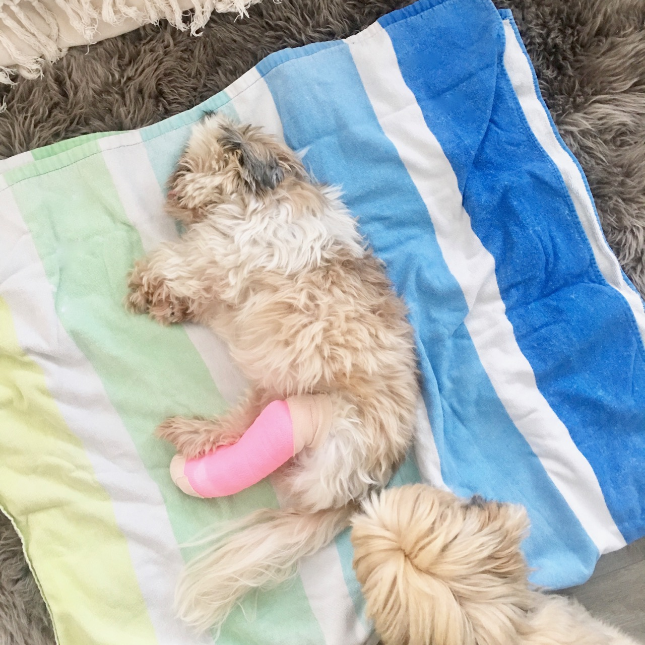 dog with pink cast on leg