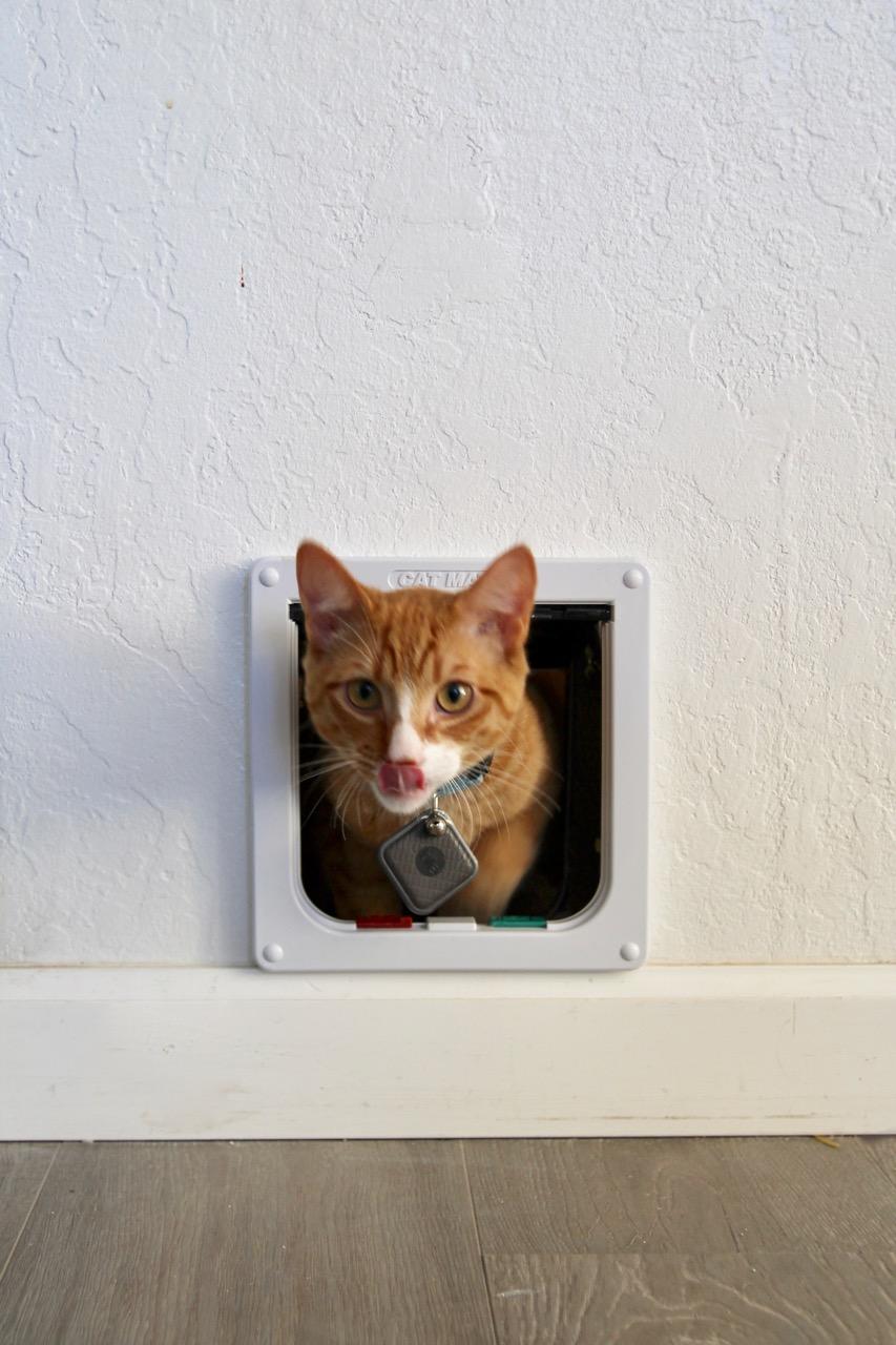 how to install a cat door