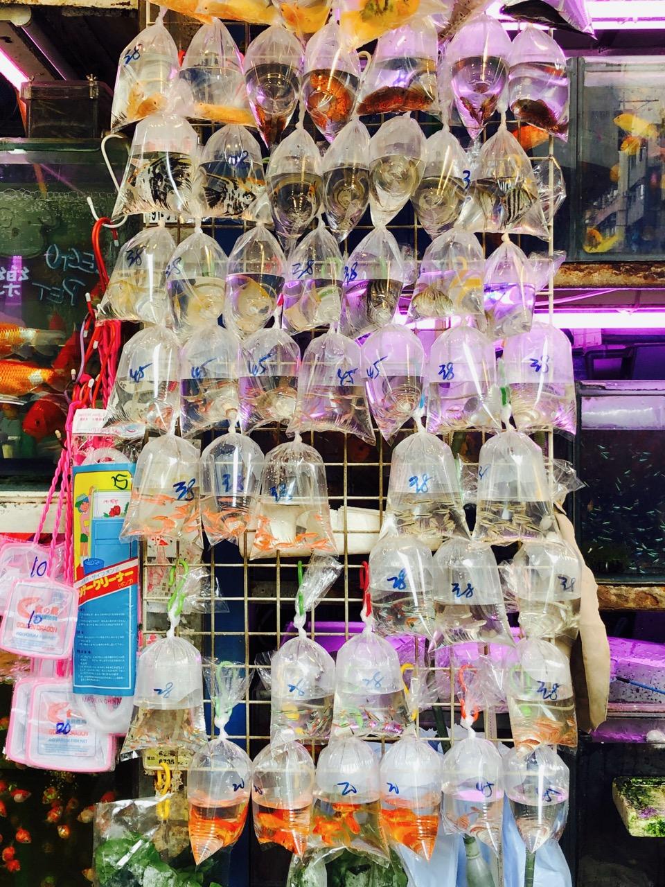 fish in plastic bags Hong Kong