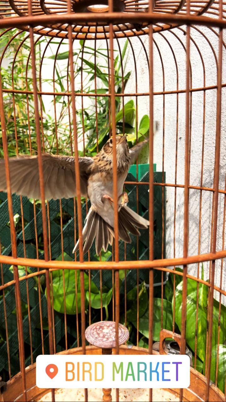 bird market Hong Kong
