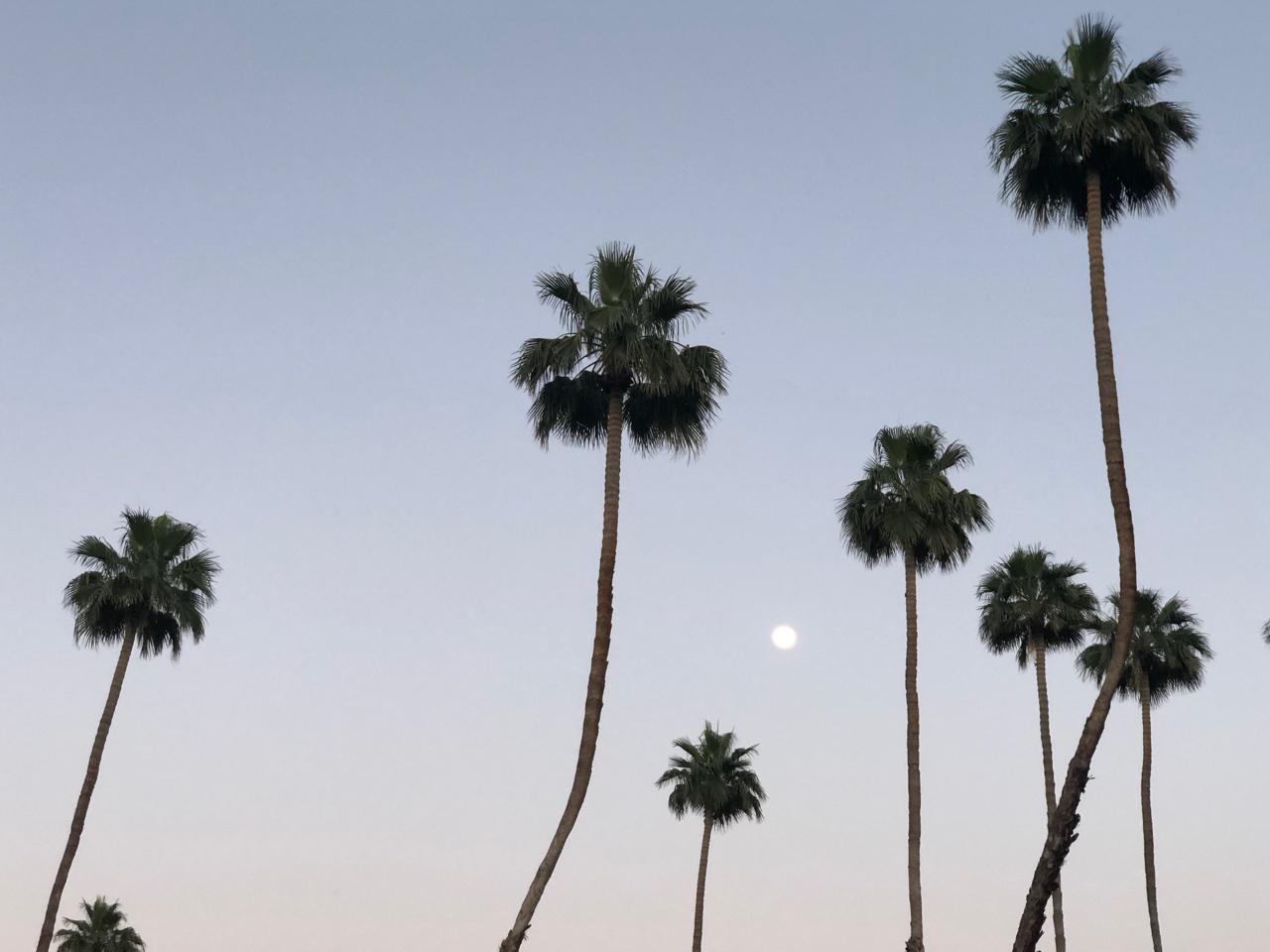 omni resort rancho las palmas splashtopia