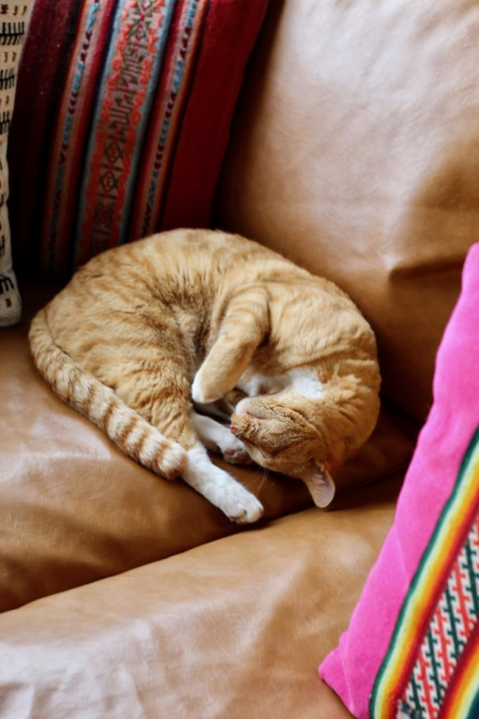 orange cat on a brown couch