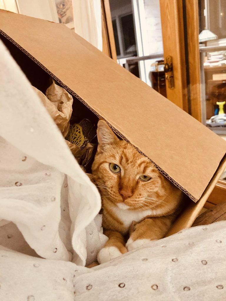 orange cat moving day